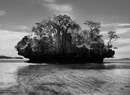 sebastiao-salgado-genesis-baobab-trees