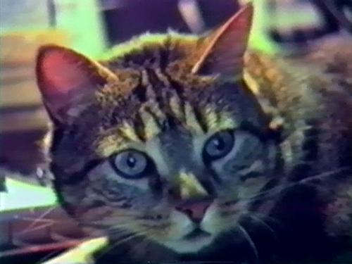 Chat écoutant la musique(Chris Marker, 1990)