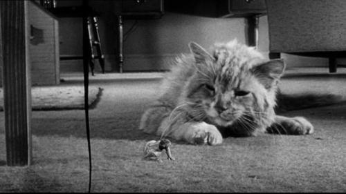 The Incredible Shrinking Man (El increible hombre menguante, Jack Arnold, 1957)